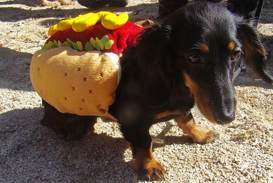 hotdogweiner